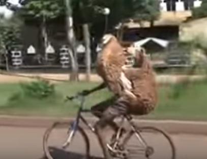 Levando as cabritas pra dar um rolê de Bike