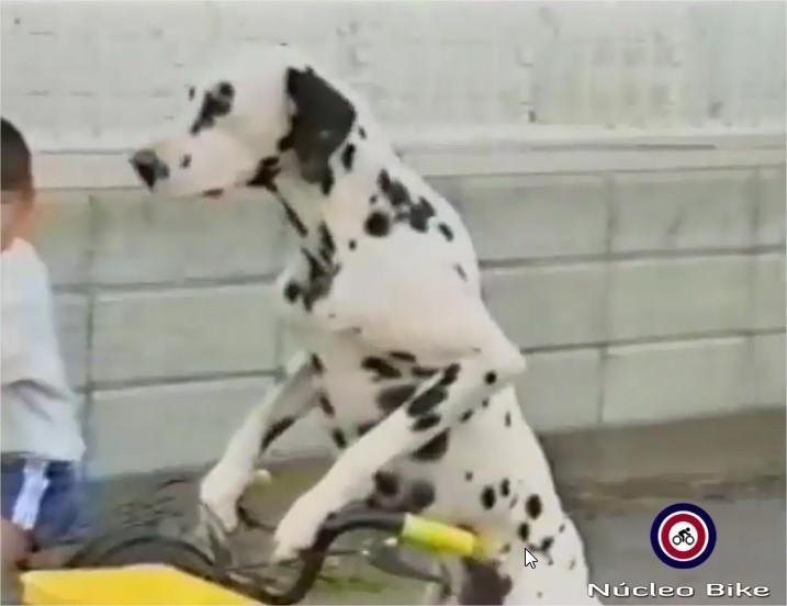 Pedalando pra cachorro